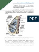 C16 - Integración_ Glandula mamaria III.pdf