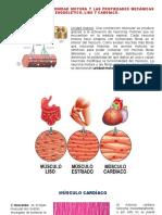 musculocardiaco.pptx