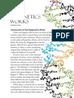 An Introduction to Epigenetics