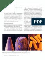 lectura celula teoria.pdf
