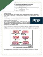 DIVISIÓN CELULAR C. Nat 9° taller y eval..pdf
