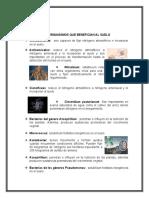 MICROORGANISMOS QUE BENEFICIAN AL SUELO (1).docx