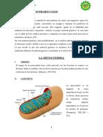 8.LA MITOCONDRIA