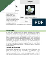 15.FLORACIÓN