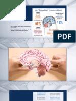 Academia de neurocieencia