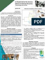 Analisis filogenetico del genero Panthera1