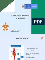 Arterias y Venas Corporal