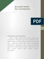 Sistem rangka pada hewan vertebrata dan invertebrata (1)