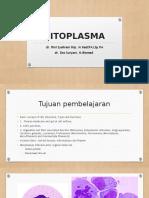 SITOPLASMA 041119