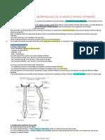 La moelle spinale.pdf