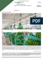 Se viene el 'boom' del banano orgánico - Redagrícola Perú.pdf