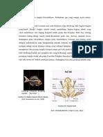Febby Nurfadilah_1900991_Kelompok 8_Skeleton Rangka Amphibi