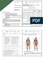 Naturales- taller sistema muscular-cuaderno