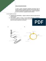 Morfología cromosómica y formación de gametas