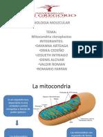 diapositivasmitocondrias-130415104107-phpapp01
