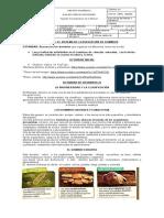 guia de ciencias sistema de  dominios 2p.docx