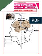 Planos-del-Lenguaje-para-Cuarto-de-Secundaria.doc