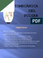 bases pulgar3.pptx