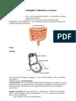 63. A vastagbél  -Intestinum crassum