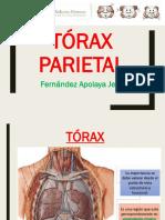 CLASE 8-TORAX PARIETAL