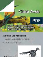 Clases de Ave
