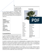 Copernicia_alba.pdf