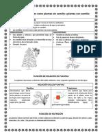 DOCUMENTO DE TERCERO GIMNOSPERMAS Y ANGIOSPERMAS (1).pdf