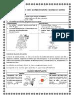 DOCUMENTO DE TERCERO GIMNOSPERMAS Y ANGIOSPERMAS