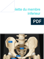 les os de membre inferieur