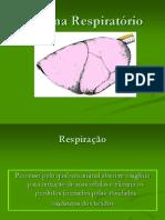 Aula 2 - Sistema Respiratório