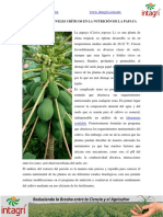 01. Nutricion de papaya (1).pdf