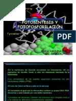FotosintesisFotoPrilacion