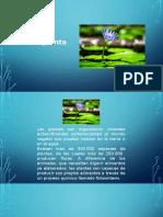 biologia la planta.pptx