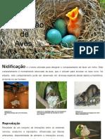 Nidificação de Aves