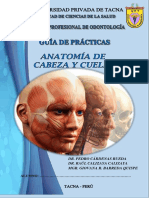 GUIA ANATO II ODONTOLOGIA.pdf