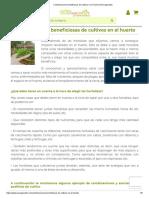COMBINACIONES BENEFICIOSAS DE CULTIVOS EN EL HUERTO