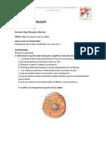 taller 2CIENCIAS NATURALES GRADO 502