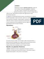 Glândulas e hormônios (Sistema Endócrino).docx