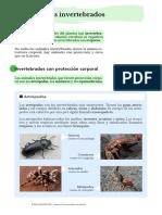 animales-invertebrados-clasificación-actividades-documento.pdf