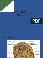 la célula y su función