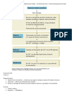 CONTRACCIÓN MUSCULAR Y CONDUCTA MOTRIZ  .pdf