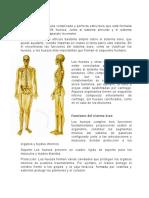 El sistema óseo