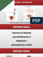 DIAPOSITIVAS SISTEMA RENAL  Y REPRODUCTIVO.pptx