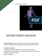 SISTEMA C vascular