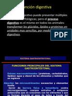 7 Sistema Digestivo