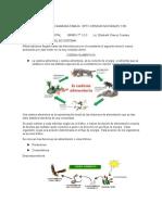 ACTIVIDAD CADENA ALIMENTICIA.docx