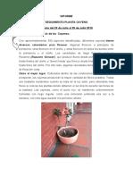 INFORME DEL CAYENO DEL 23 DE JULIO AL 29 DE JULIO 2019