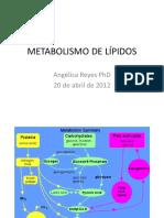 clases_Lipidos_Areyes_20_4_12
