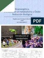 Metabolismo Fosforilación TA 2018.pdf