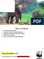 borneo elephant inc